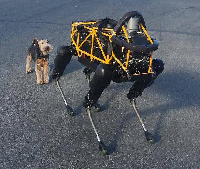 20667 Встреча робота Spot и собаки