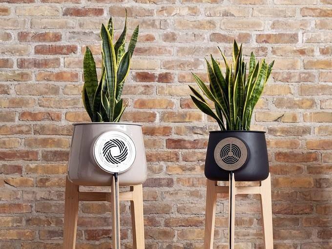 20907 Воздухоочиститель из горшка и растения