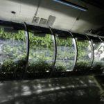 39310 В NASA создали теплицу для космических колонизаторов (5 фото)