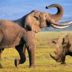 40030 ИИ и дроны охраняют африканских животных от браконьеров (видео)