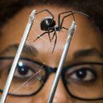 41474 Пауки плетут паутину для армированного бионического шелка