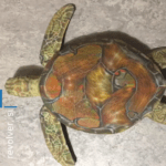 43365 Нейросеть от Google приняла черепаху за винтовку (4 фото + видео)
