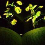 44411 Светящиеся растения придут на смену фонарям